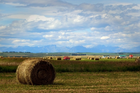 Hay Rolls And Rocky Mountains On The Back Fields Nature