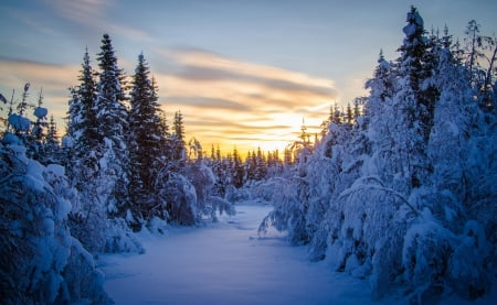 Winter Sunset - sunset, winter time, trees, sky, clouds, snowy, winter, splendor, snow, nature, winter sunset, landscape