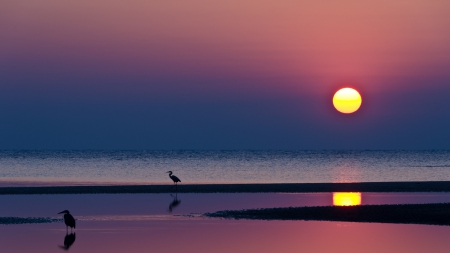 herons on a beach at a crimson sunset - beach, crimson, birds, sunset, sea