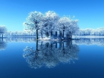Reflecting frosty trees