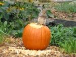 Halloween munchkin on a pumpkin