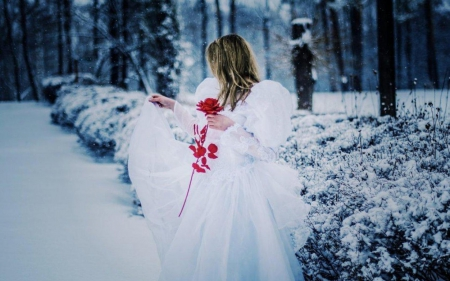 Red rose fantasy abstract background wallpapers on - Rose in snow wallpaper ...