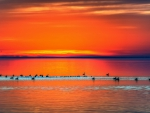 ducks in a lake under orange sunset