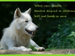 arctic-wolf-poem