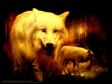 The Wolves - The Wolves, black, animal, timber, quotes, wild, the pack, wolf, wolves, white, pack, lone wolf