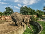 elephant in a zoo drinking from the moat hdr