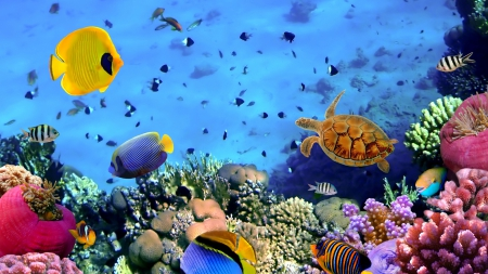 wonderful sea life on a coral reef - fish, turtle, colors, sea, coral reef