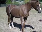 CMK Arabian