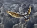 Zeus Eagle - HDR