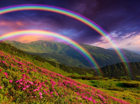 Rainbow over flowers - colorful, amazing, lovely, view, grass, colors, beautiful, spring, rainbow, sky, clouds, mountain, slope, flowers, field, landscape
