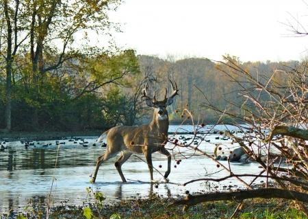 big buck wallpaper  Big buck - Deer