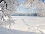 Frigid Winter