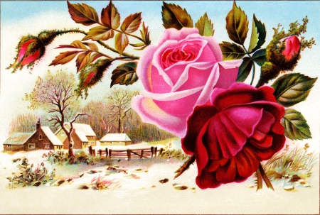 Snow'n Roses - blossoms, village, artwork, winter, landscape