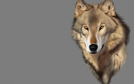 wolf art - black, animal, timber, quotes, wild, the pack, wolf, wolves, white, pack, lone wolf