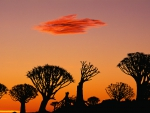 silhouettes of marvelous trees in africa at sunset