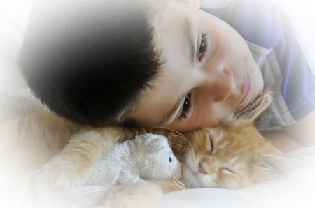 Boy Cat And Toy Cats Animals Background Wallpapers On Desktop