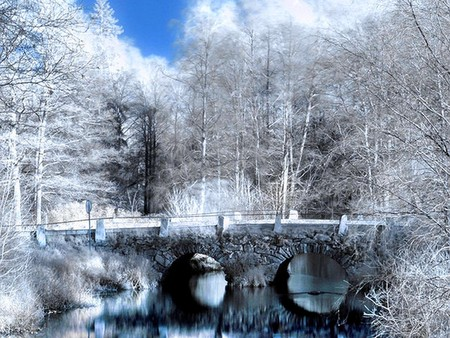 white forest - forest, bridge, white, trees, lake