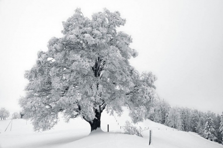 Tree-In-Winter-Dress