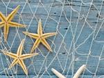 Starfishs