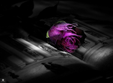 Rose&Book - Photography & Abstract Background Wallpapers on Desktop Nexus (Image 1664352)