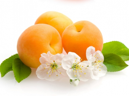 Apricots - photo, fruit, blossom, food, fruits, apricot