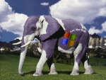 Windows Elephant
