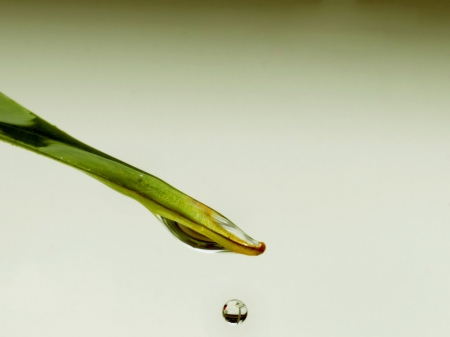 water drop - green, water, plants, drop