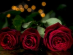 * Beautiful red roses *