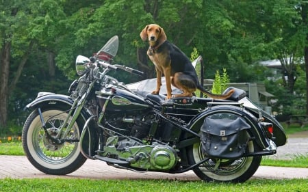 harley with gard dog - art, motorbikes, bicycle, bikes, custom, assembled, wallpaper, choppers, motorcycles, chopper