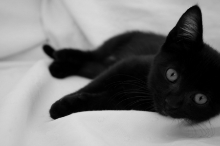 Black Kitten Cats Animals Background Wallpapers On Desktop Nexus Image 1668288