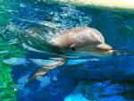 *** Dolphin ***