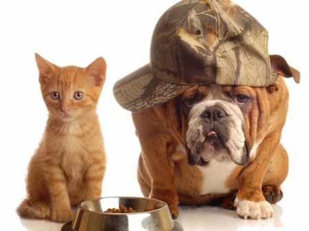 bodyguard - animal, kitty, bodyguard, bulldog, cute