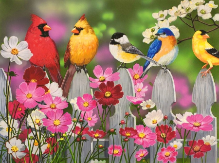 Song birds and cosmos other abstract background wallpapers on song birds and cosmos fence pretty colorful beautiful adorable sweet mightylinksfo