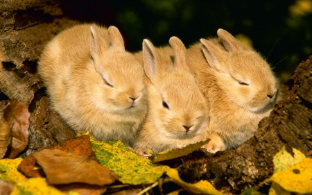 three in a row - spring, brown, bunnies, animals