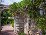 flowering vines on a garden entrance archway