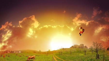 a flight of balloons over pastures at sunrise - sunrise, cows, pastures, balloons