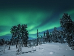 northern lights above a winter scene
