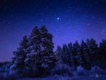 under_the_starry_sky