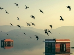 birds over buildings in a flooded lake in jaipur