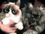 Grumpy and friend