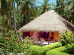 Lush and Green Beach Hut