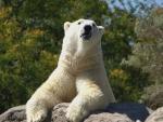 *** Polar bear ***