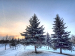 beautiful winter morning hdr
