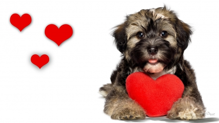 Puppy Love Iii Dogs Animals Background Wallpapers On Desktop