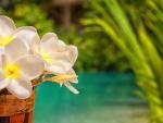 Plumeria by the Pool Tahiti
