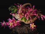 *** Basket of orchids ***