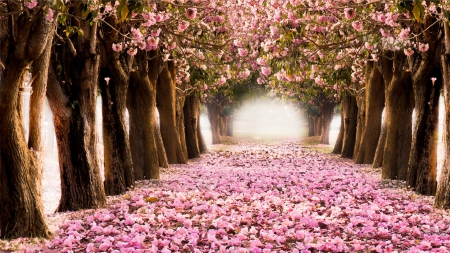 Tunnel Of Spring Trees Flowers Nature Background Wallpapers On