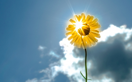 Image result for sunshine and flowers