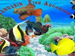 Mandarin Fish Aquarium