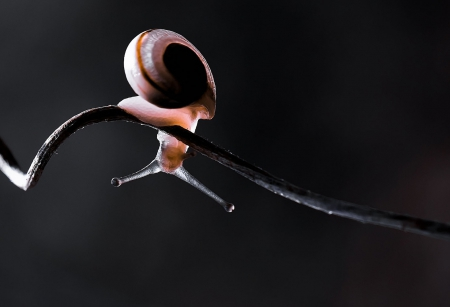 Snail - close-up, snail, lights, snails, nature